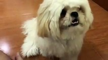 Funny Dog    Cute Dog Compilation    Cute Dog Fun The Owner    Dogs are Love    Dogs are Loyal     Dogs are Friends