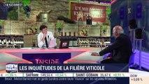 Les inquiétudes de la filière viticole - 11/02