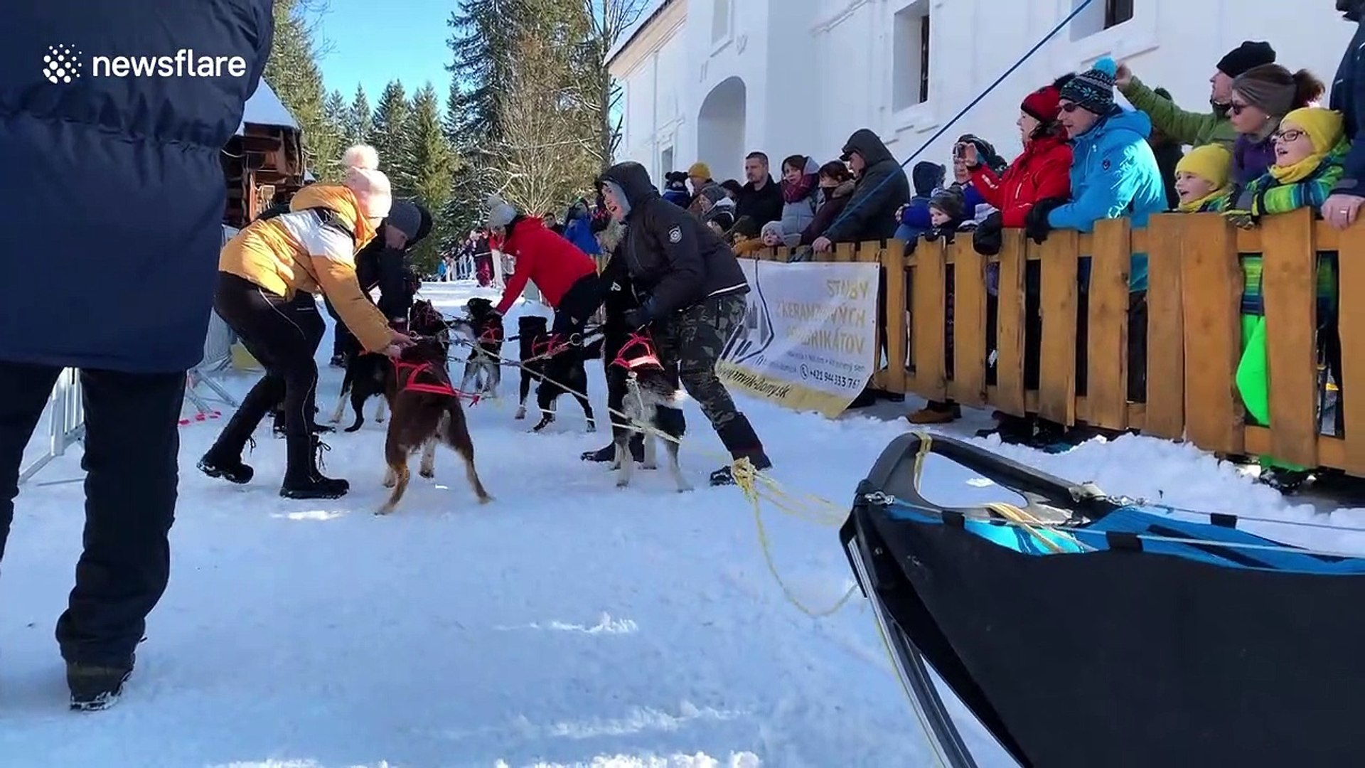 Dog Driver A Guide for the Serious Musher