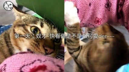 CollectionVideo-petmao_curation-petsmao.nownews-copy2-PetsMaoParser-2020/02/12-09:30