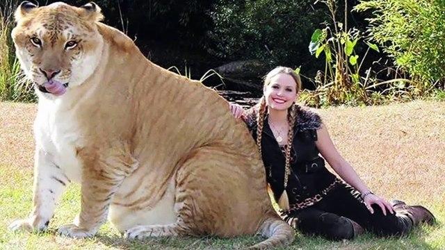 Top 10 FATTEST Wild Animals Ever Seen