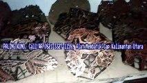 TERKUNO, Call/WA 0821-3327-1158, Cap Batik Kayu Lebong