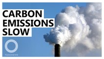 Global CO2 emissions plateaued last year: Report