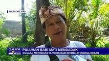 Lagi-Lagi, Puiuhan Babi Mati Mendadak di Bali