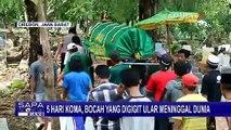 Digigit Ular, Balita di Cirebon Tewas