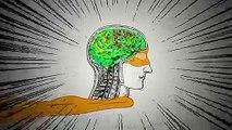 C'est la fin des mythes : l'homme utilise bien 100% de son cerveau