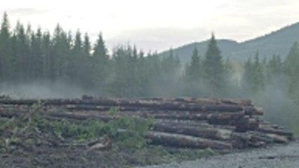 Claves de cómo evitar la deforestación desde tu hogar