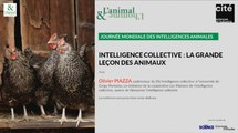 Conférence d'Olivier Piazza : L'intelligence collective des animaux