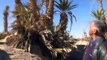 الواحات المغربية مهددة بالزوال بسبب الجفاف