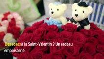 Des roses à la Saint-Valentin ? Un cadeau empoisonné