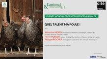 Conférence de Philippe Rocher, Hervé Husson et Sébastien Moro : Quel talent ma poule !