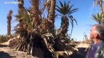Changement climatique : les oasis en voie de disparition