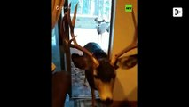 Colorado fines a woman for attracting deer to her home with food