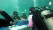 Weddings underwater for Valentine