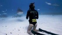Cette plongeuse va à la rencontre de requins tigres