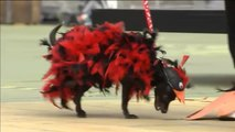 Dulces, bailarinas y Maléficas de cuento se dan cita en el Carnaval Canino 2020