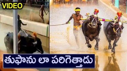 Kambala Jockey Srinivasa Gowda Running Video | Oneindia Telugu