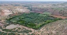Un couple hindou achète des terres près d'une réserve de tigres et laisse la forêt pousser pour donner plus de liberté aux animaux