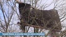 Tempête Dennis: un plancher dans les arbres à Gembloux