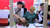 Vietnã realiza primeira exposição nacional de gatos