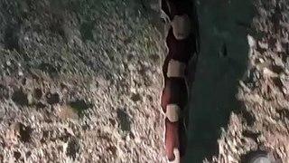 Popular encontra cobra de aproximadamente quatro metros em Conceição