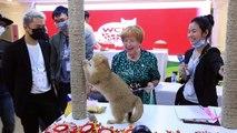 Primeira exposição de gatos no Vietnã