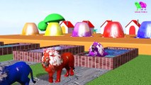 Farm animals and their young are transformed into wild animals and their young