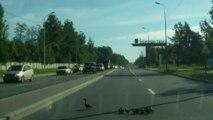 Ducks cuasing chaos!