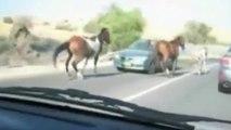 Horse running against traffic