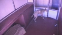 Dogs escaping from kennel