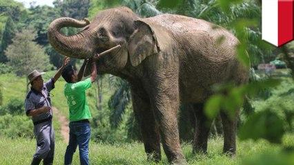【レッドリスト】頭部を切断され、牙を奪われたスマトラゾウの死骸発見 インドネシア - トモニュース