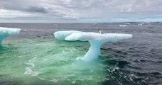 Ils pensent avoir trouvé un phoque au sommet d'un iceberg... Pas du tout