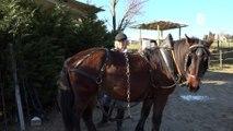 Reportage - Le cheval du Vercors de Barraquand sera représenté au salon de l'agriculture 2020