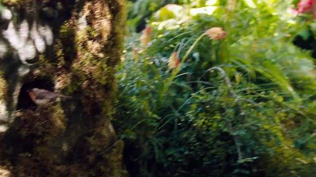 The Secret Garden - Trailer