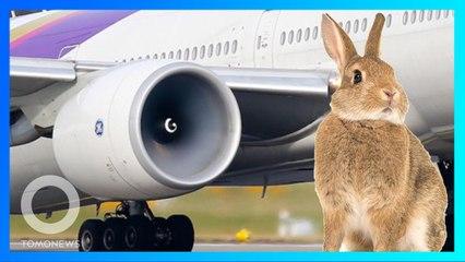 【ラビットストライク?】飛行機に近づきすぎたウサギ エンジンに吸い込まれる - トモニュース