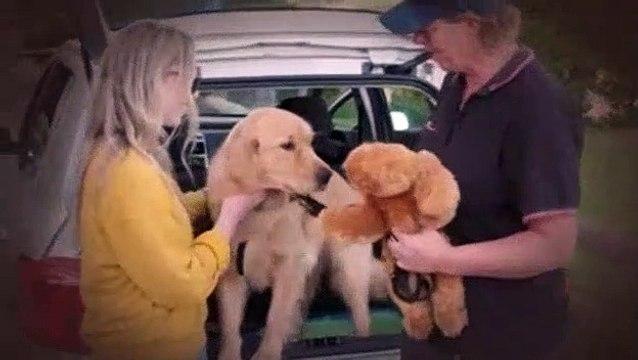 Dog Squad Puppy School S01E02