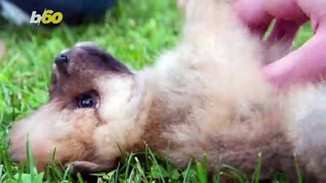How Having a Puppy in Your Life Could Make a Huge Difference For Your Health and Happiness