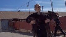 Joaquin Phoenix sauve une vache et son veau d'un abattoir