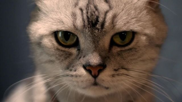 Scientist Explains Why Some Cats Eat Human Corpses