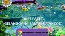 Tlp. 0815-6110-900, Paket Gelanggang Samudra Ancol Bandung
