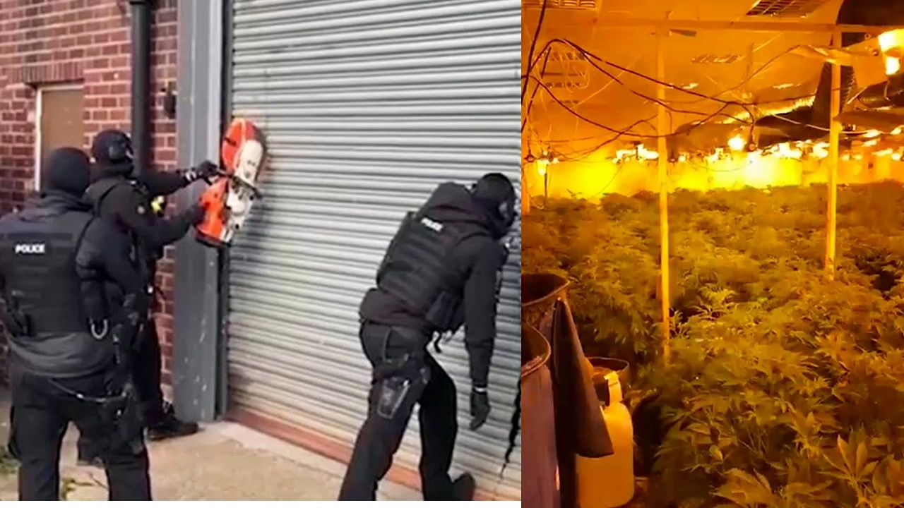 Northumbria POLICE found CANNABIS FARM the size of a football pitch |Cannabis farm 'the size of a football pitch' sniffed out by funfair cop