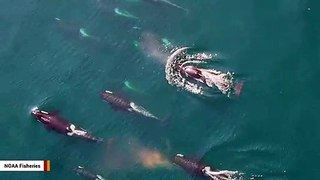 Scientists Find Surprising Reason Whales Swim Thousands Of Miles