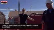 Joaquin Phoenix sauve un veau de l'abattoir : une scène surréaliste (Vidéo)