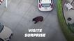Un ours se balade dans un quartier résidentiel de Californie