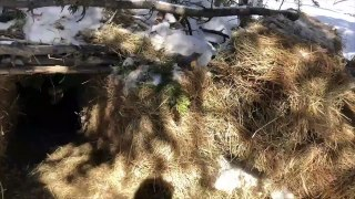 Colorado Authorities Build Den For Orphaned Bear Cubs