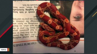 Woman Shocked To Find Snake Under Vacuum Cleaner Inside Her Closet