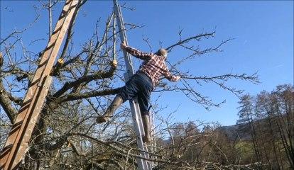 A Lutter, une journée d'action pour combattre le gui dans les arbres fruitiers