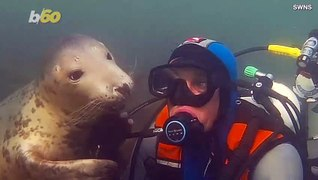 Diver Gets Unexpected Hug from Wild Seal