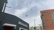 Locust Swarms Coat the Skies of Saudi Arabia