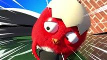 CucKoo Cartoon  Cuckoo Chicken 2020 - Part 34 Drôle de bande dessinée pour les enfants 2020